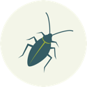 Icon of a cockroach
